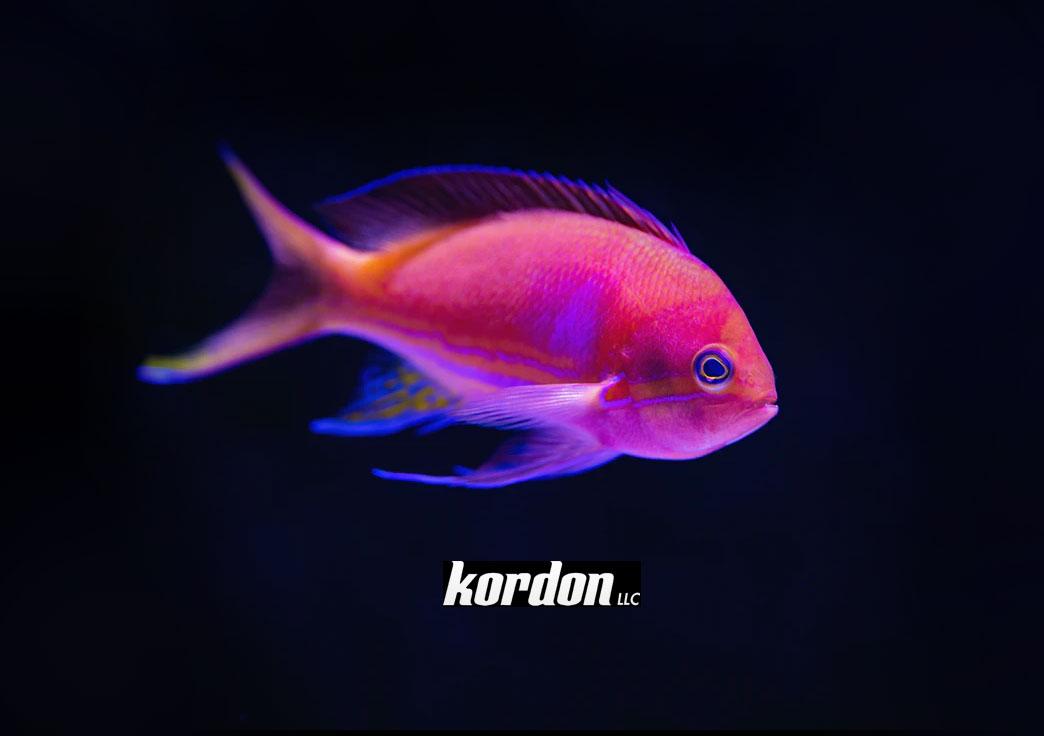 Kordon LLC.