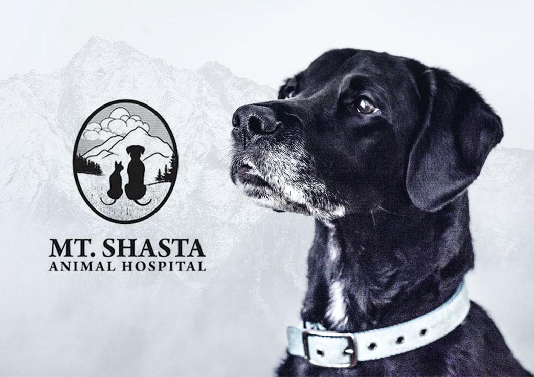 Mt. Shasta Animal Hospital